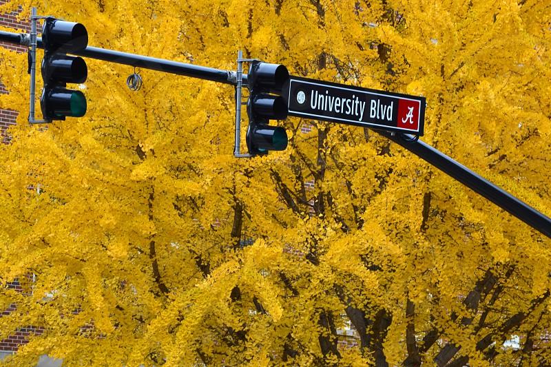 Alabama.spring.yellow photo