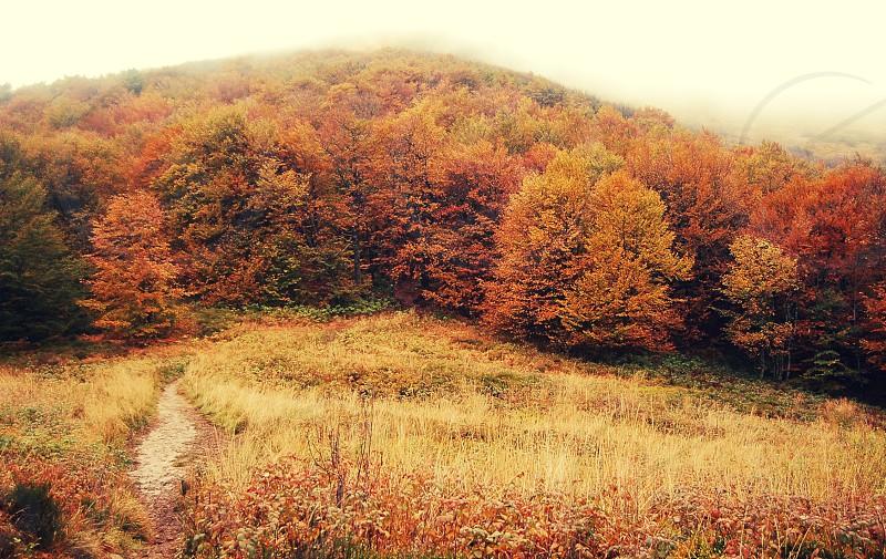 Autumn in Bieszczady mountains in Poland photo