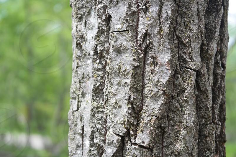Macro of a tree photo