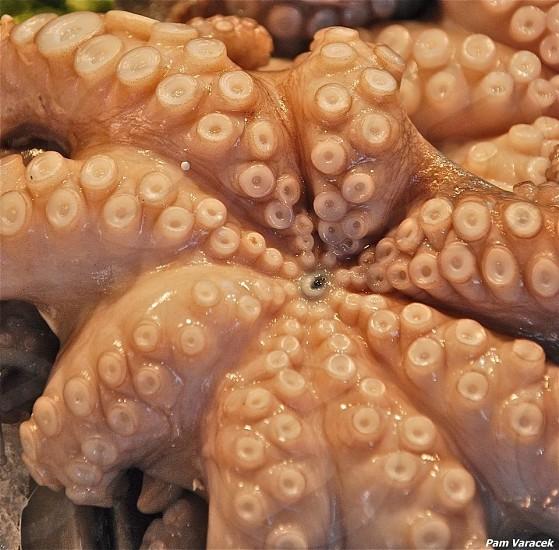 Octopus in market in Venice  photo