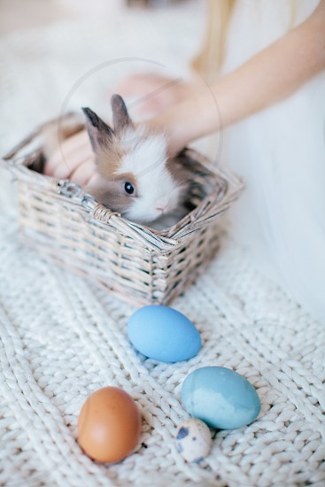 person petting brown and white rabbit in brown basket photo
