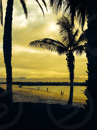 Silhouette palm trees sea people fishing beach golden yellow photo