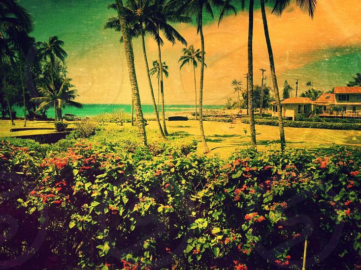 Beach on Kauai photo