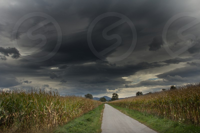 Storms clouds gather over a country road and corn fields in the Ljubljana Moors Europe's southernmost wetlands just outside of the Slovenian capital Ljubljana. photo