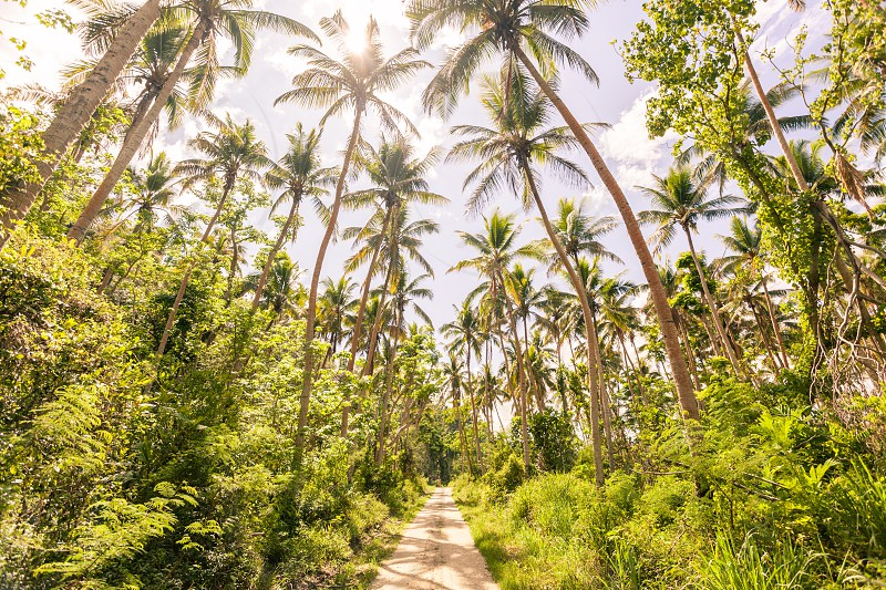 Path leading through palm tree forest on tropical island of Vanuatu. photo