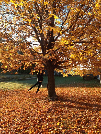 one man hanging on maple tree photo