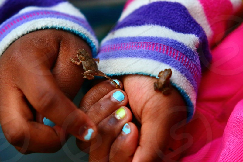Two toads wander around a young girl's welcoming hands. photo