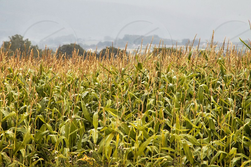 Field of cropsharvestgrowplantfarmlandruralcountryside photo