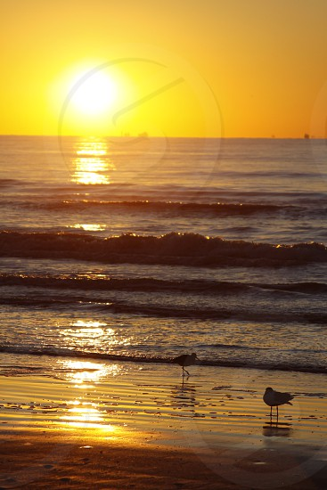 A beautiful Gulf of Mexico sunrise. photo