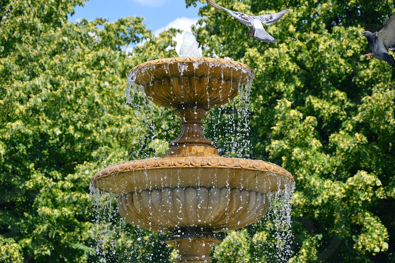 Birds arriving to the Fountain photo