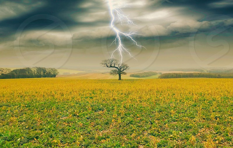Lightningtreelandscapedarksky photo