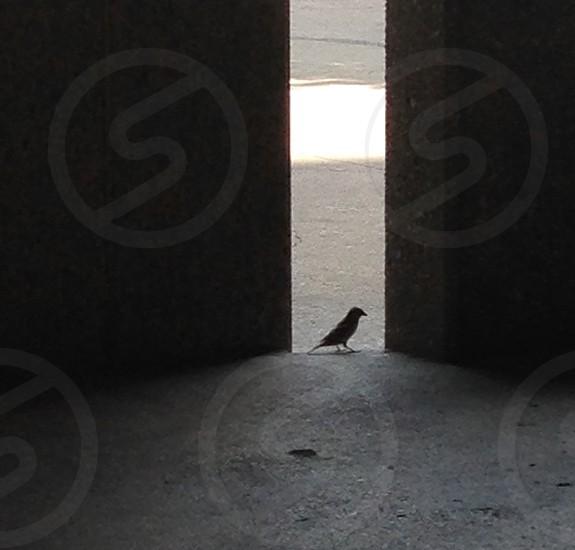 gray bird near wall photo