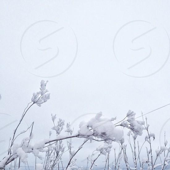 white cotton photo