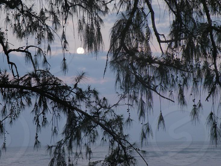 Sunrise through tree photo