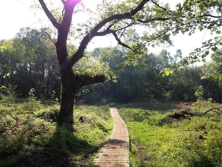 woodland woodland path sunburst English countryside photo