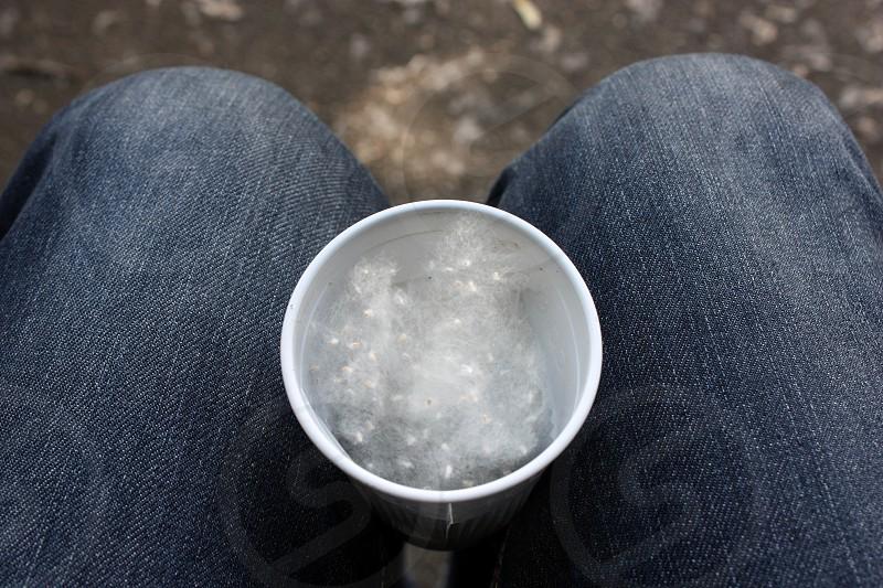 legs knees cup pollen photo