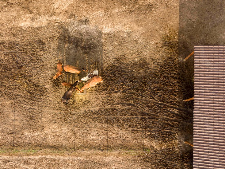 Horses eat fresh hay from a wooden box on a farm on a summer day. Aerial view from the drone photo