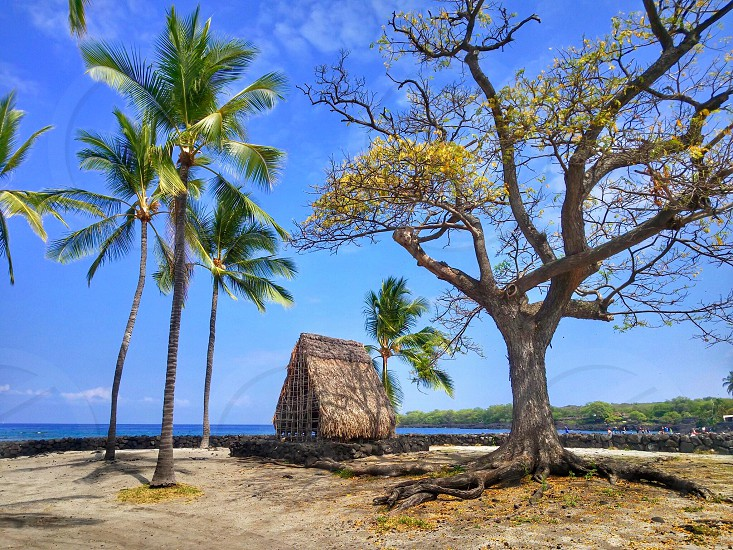Beach water sacred grounds spiritual hut trees architecture landscape sand palm trees photo