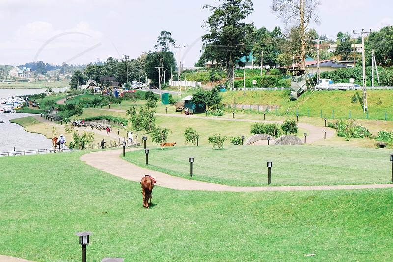 travel·Sri Lanka·park·horse·green·grass photo