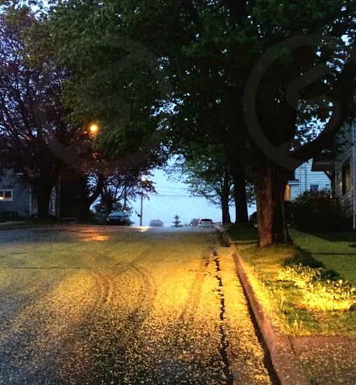 Eveningskytreesroad photo