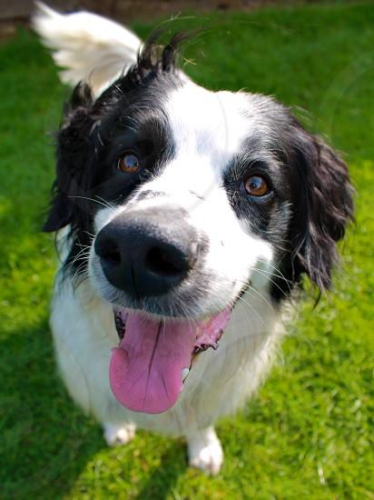 Smiling happy dog photo
