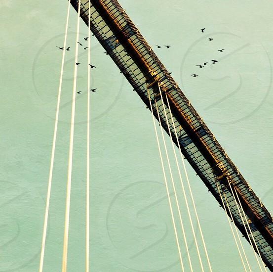 birds over the bridge low angle photography photo