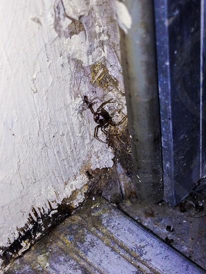 Spider corner spider web web photo