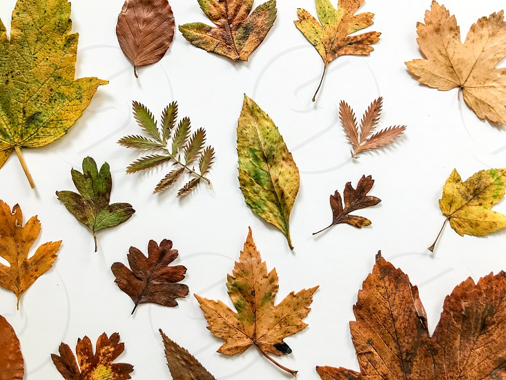 Set of autumn leaves isolated on a white background photo