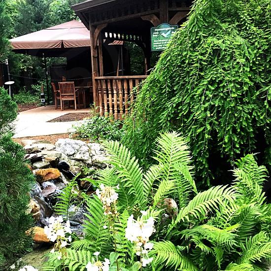 Cabana rocks plants ferngreenerywater photo