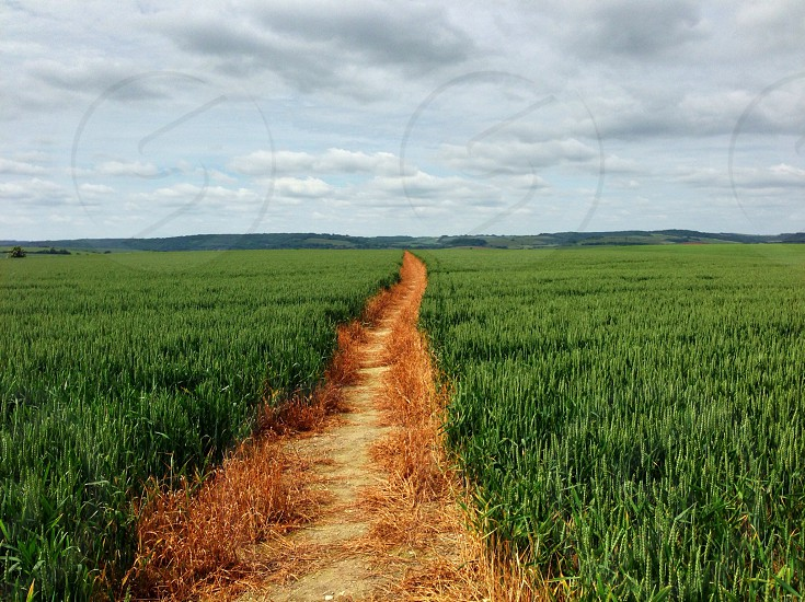 This path through a field in in South Stoke in Berkshire it's part of an 8 mile walk we regularly do in our local area with stunning views and landscapes. photo