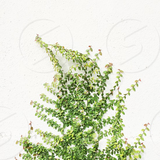 small green plant leaves photo