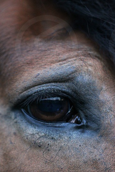 mammal eye photo