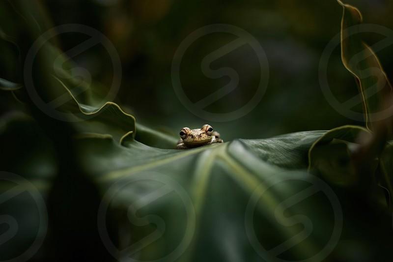 Green frog frog POV Nature spring  photo