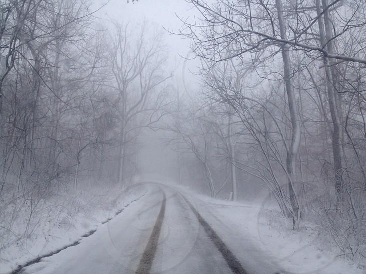 snowy road between trees photo
