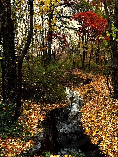 Streaming brook photo