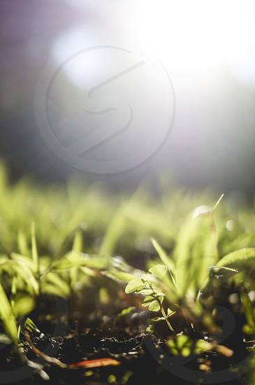 new growth grass. nature grass light growth inspiring reflective meditative photo