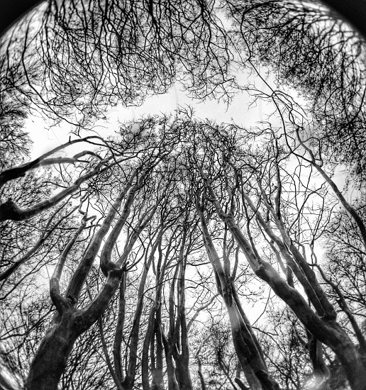 black trees photo