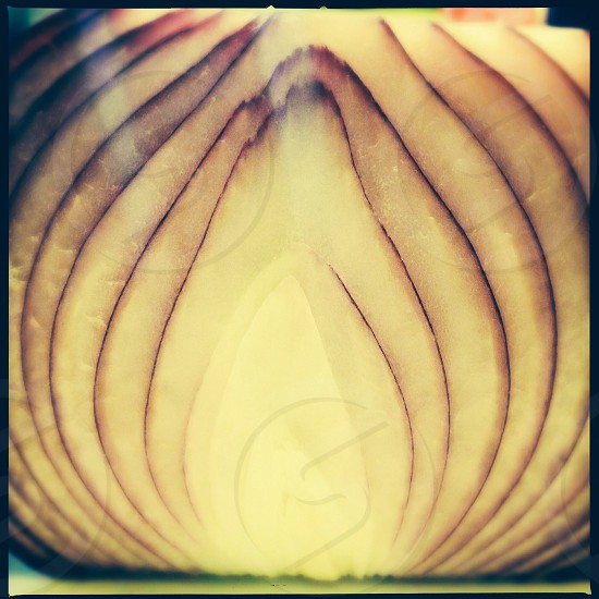Red onion - close up photo