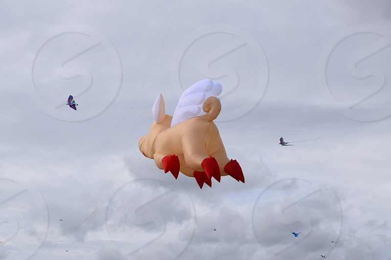 flying pig photo
