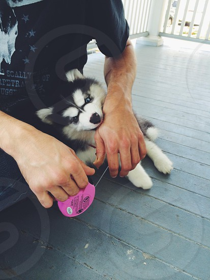 small puppy biting a person's hand photo