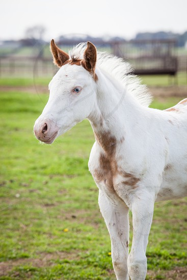 Baby horse in the field photo