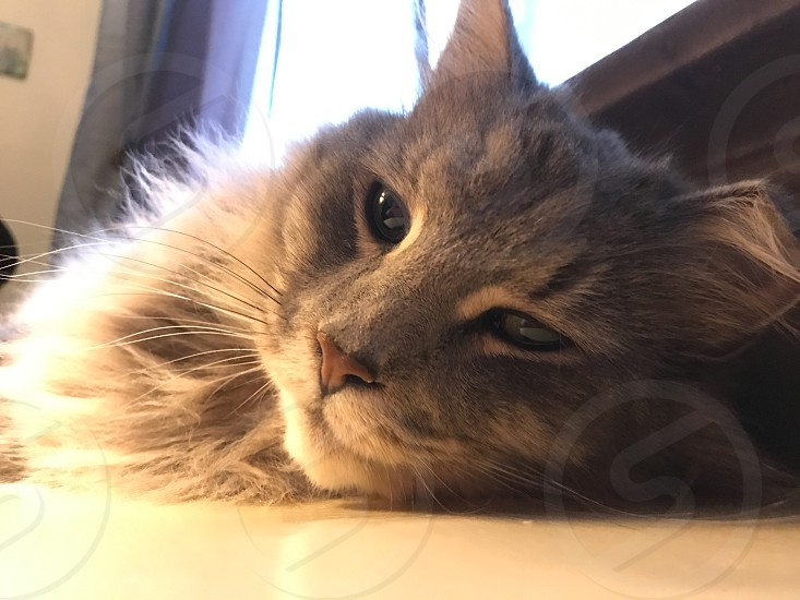 My cat Tom photo