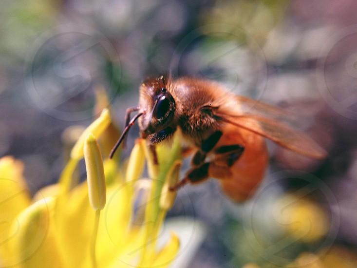 orange and black bee on yellow flower photo