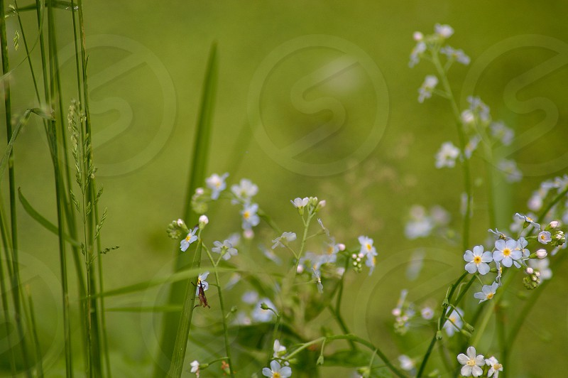 Green. Mini scenic. Flowers.  photo