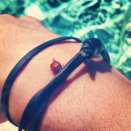 ladybug on wrist photo