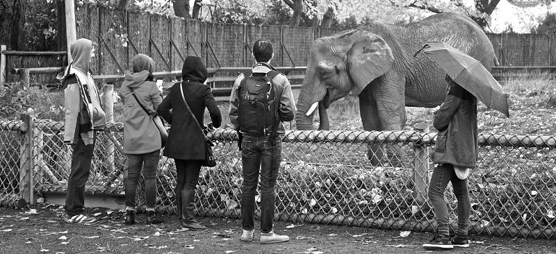 Shot at Granby Zoo (QC) photo