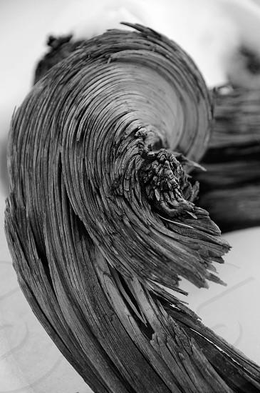 Twisted Juniper  photo