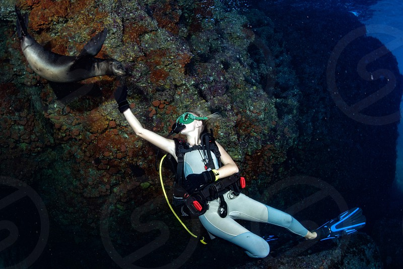 sea lion seal coming to beautiful blonde diver girl underwater while diving in los islotes island sea of cortez Mexico photo