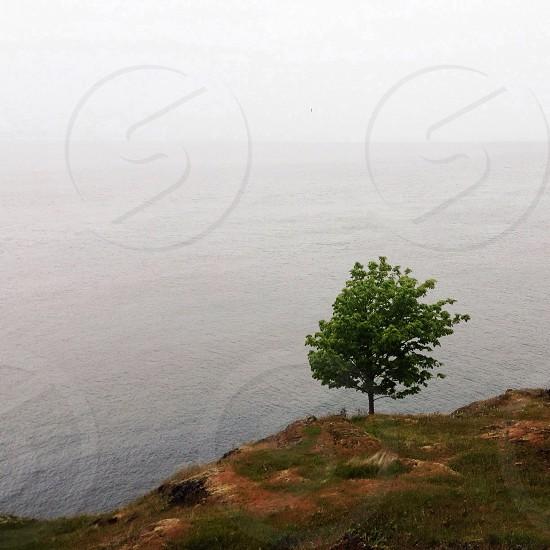 green tree on mountain cliff photo