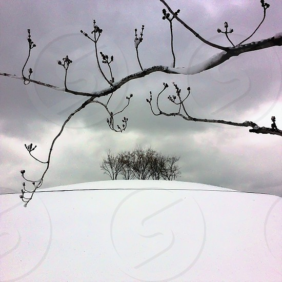 snow covered field with dried trees photo